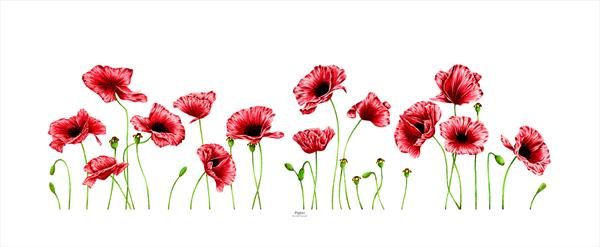 Poppies by Leigh  Townsend