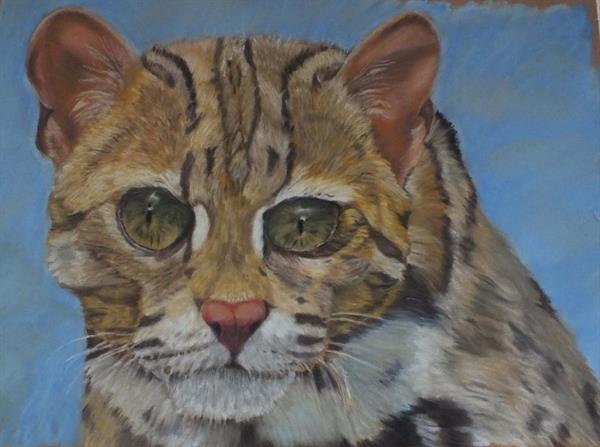 Endangered asian leopard cat by Lisa  Furness