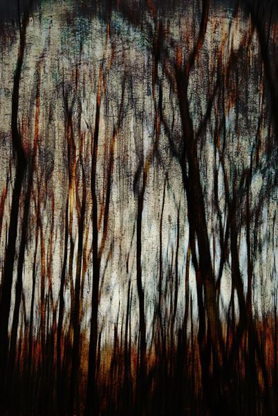 Tree Illusion by Linda Hoey