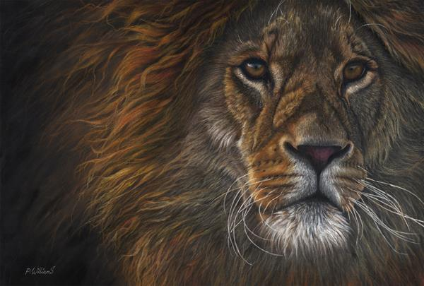 Valiant African lion pastel painting by Peter Williams