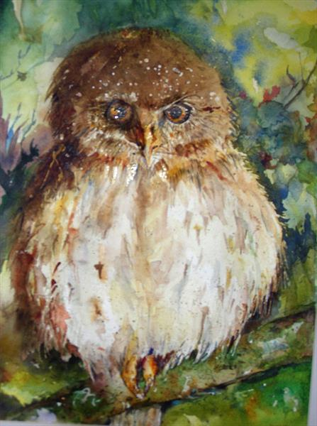 Owl watching by Pat Knight