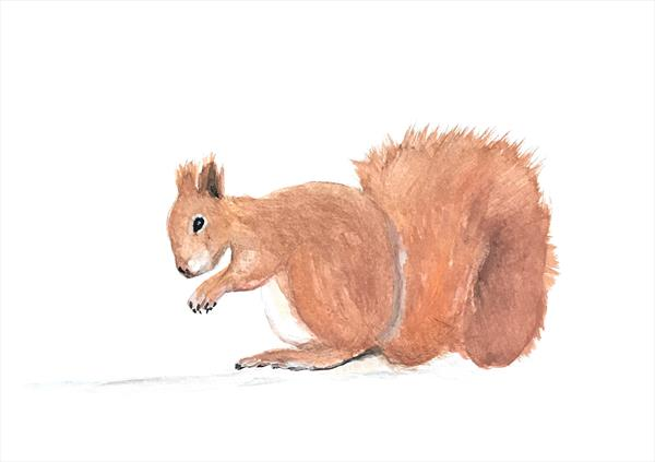 Squirrel watercolour painting  by Monika Howarth