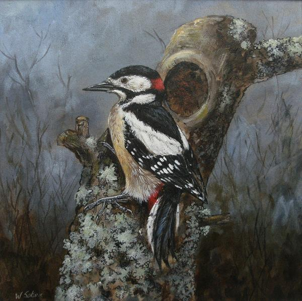 Great  Spotted Woodpecker by Wendy Sabine