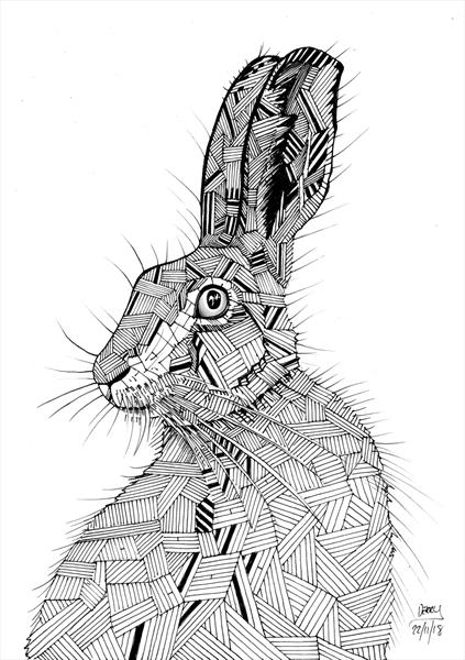 Here Hare by Spencer   Derry