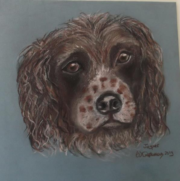 Springer Spaniel Jasper by Wendy Cappleman
