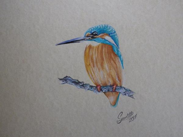 Kingfisher  by Steph Scarlett