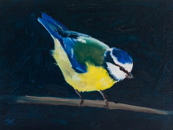 Blue Tit 1 by John Crabb