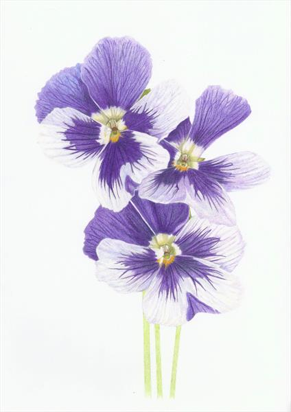 Purple Pansies by Judith Selcuk