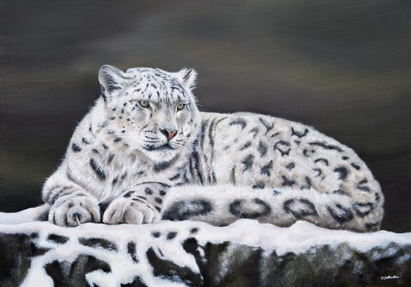 Snow Leopard by Sarah Featherstone