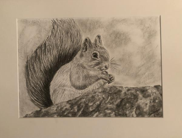 Scottish Red Squirrel by Samantha King