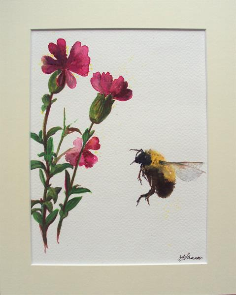 Bumble Bee & Pink Campion by Teresa Tanner