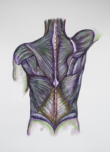 Musculature by Jacqueline Talbot
