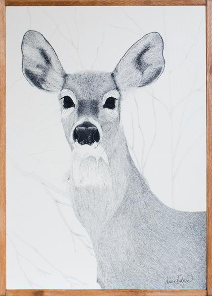Deer by Kelsey Emblow
