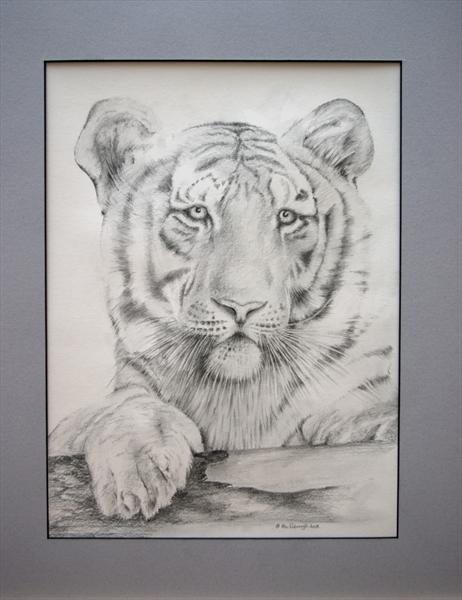 White Tiger by Alan Pickersgill