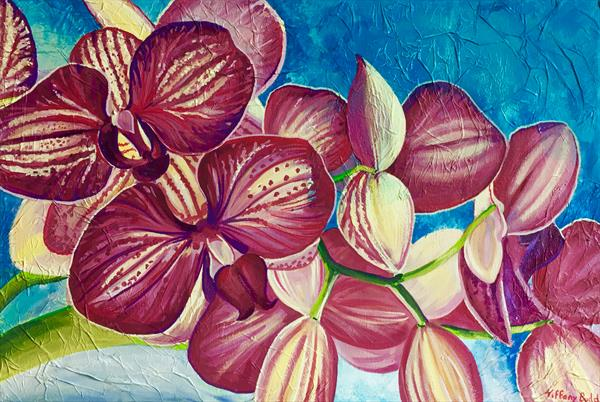 Orchids by Tiffany Budd