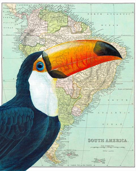Toucan on South America Map Limited Edition Print by jane Wilson