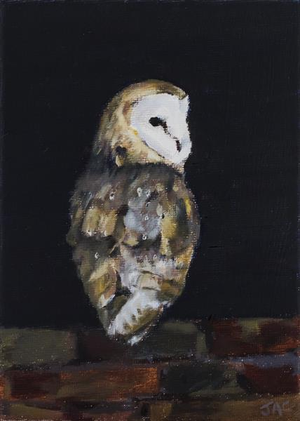 Barn Owl on Wall by John Crabb