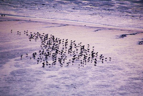 Birds - Waders On the Shore by Rosie Gosden
