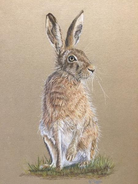Brown Hare by Rachel Tappin