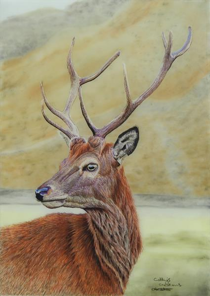 Stag by Cathy Settle