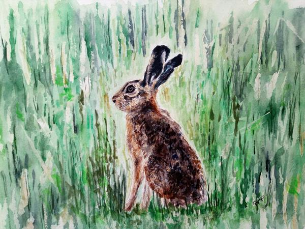 Young Hare by Sue  Mobbs