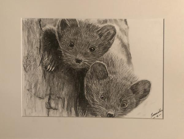 Scottish Pine Martens  by Samantha King