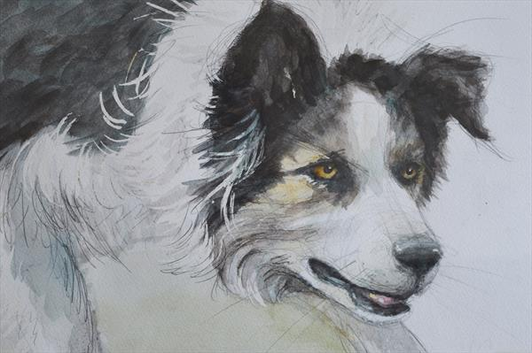 Sheepdog working by Alison Brodie