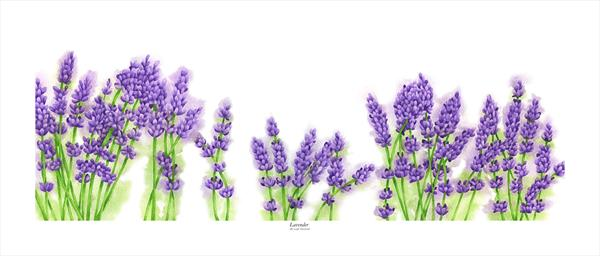 Lavender by Leigh  Townsend