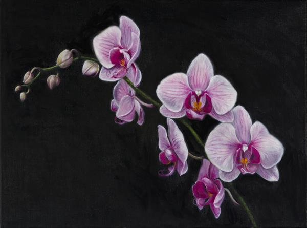 A Spray of Pink Orchids by Andrew Mcneile Jones