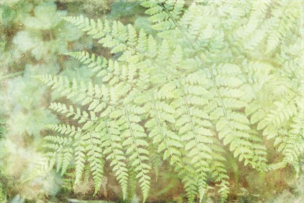 Fern by Linda Hoey