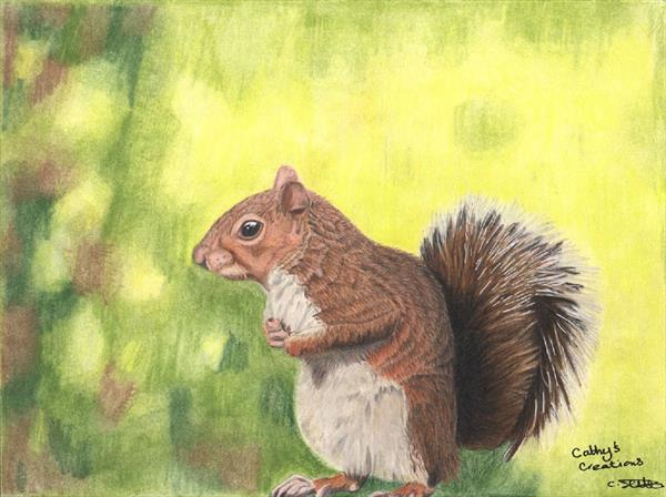 Solitary Squirrel by Cathy Settle