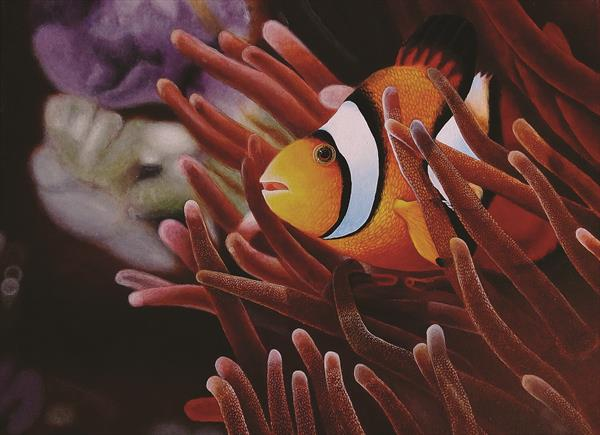 Clownfish 10.8'' x 14.6'' by Barry John Gray