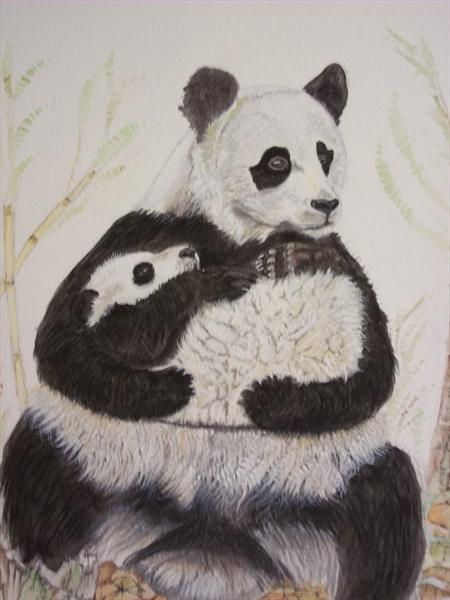 Panda With Young