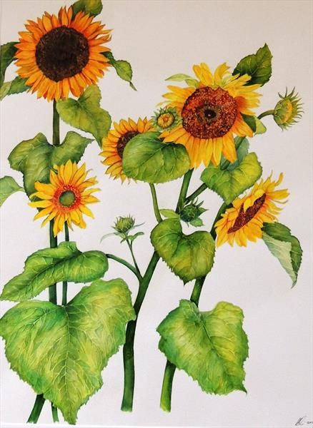 Glorious Sunflowers by Elizabeth Sadler