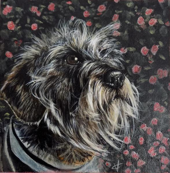 Wire in the Roses: wirehair dachshund painting by Victoria Coleman by Victoria Coleman