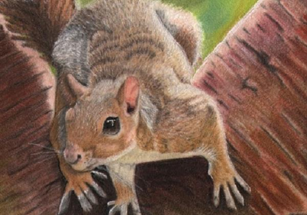 Squirrel in a tree by Cathy Settle