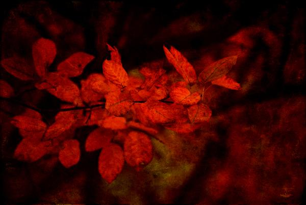 Red by Linda Hoey