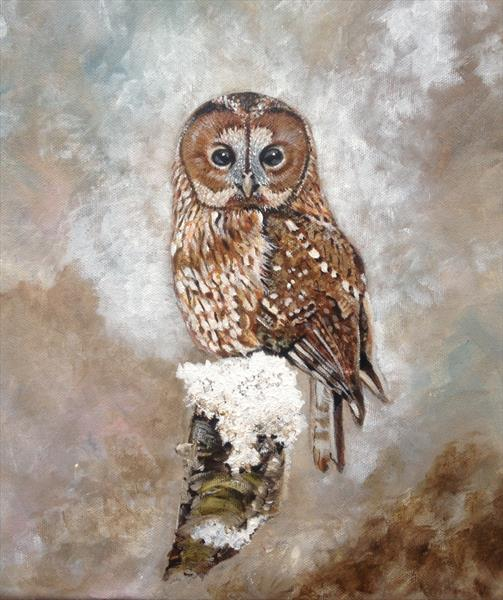 Tawny Owl by Jude Cottrell