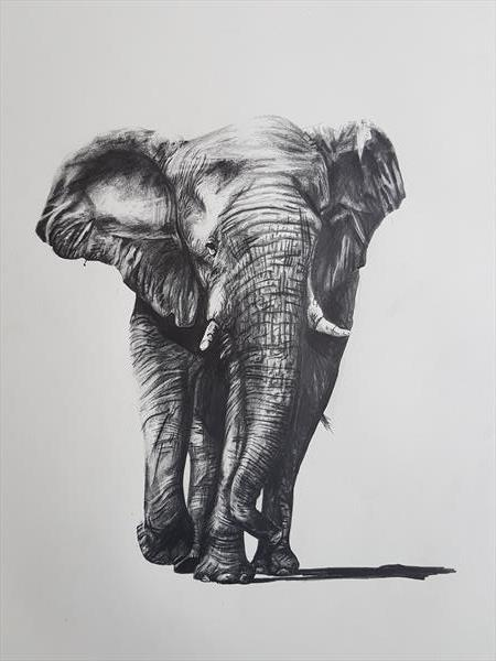 Elephant 01 by Sean Wales