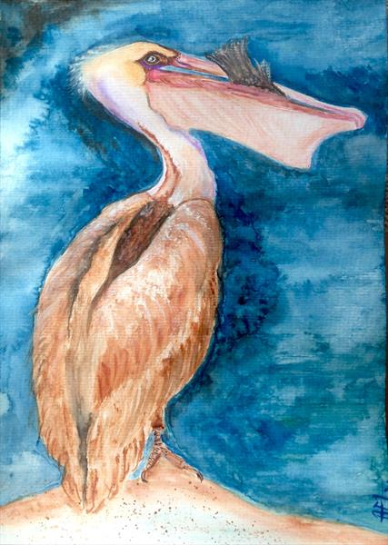 California Pelican: Feast ( mounted) by Anushree Mish