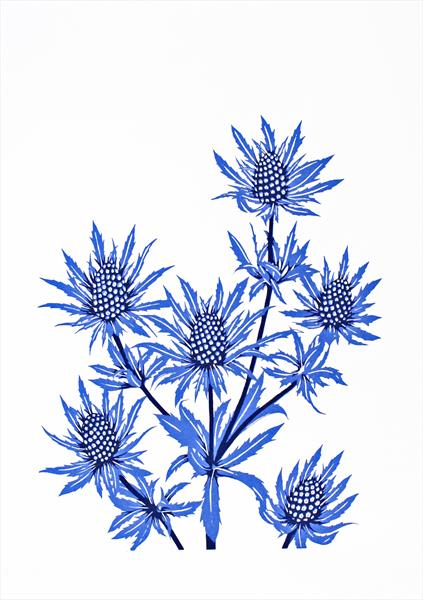 Sea Holly by Kathryn Edwards