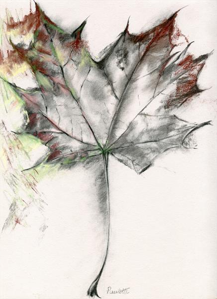 Nature Tree Art - Maple by Paulette Farrell