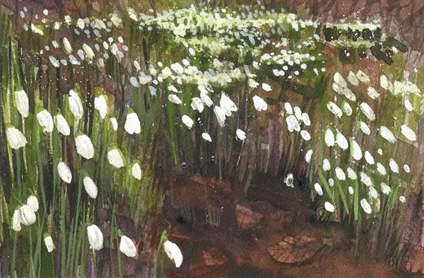 Snowdrops by Tracy Butler