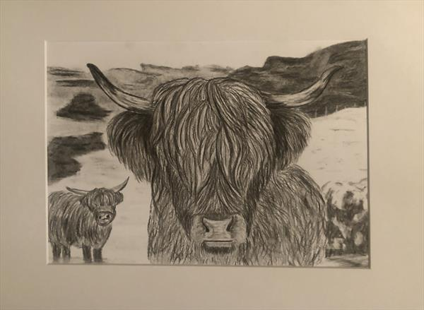 Scottish Highland Cow  by Samantha King