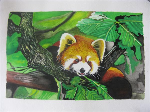 Peek a boo, Red Panda. by William Maundrill