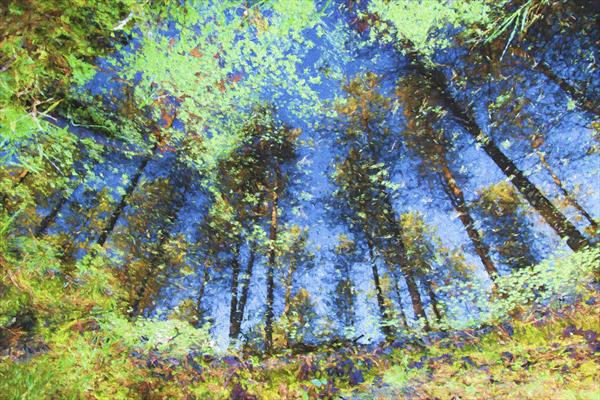 Reflected Woodland by Ron Whitby