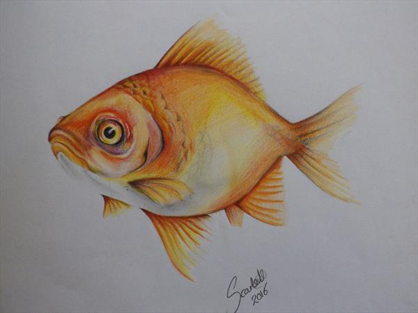 Gold Fish  by Steph Scarlett