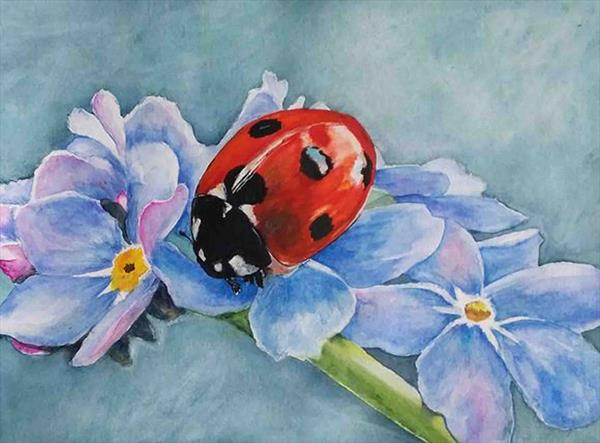 Ladybird on Forget-me-not by Maureen Crofts