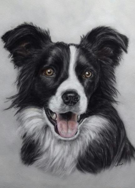 Border Collie Expression by Tracey Earl