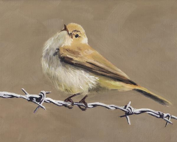 Chiffchaff on Wire 2 by John Crabb